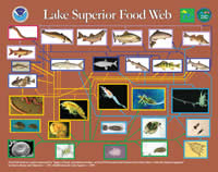 Food web diagram of Lake Superior