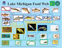 Food web diagram of Lake Michigan